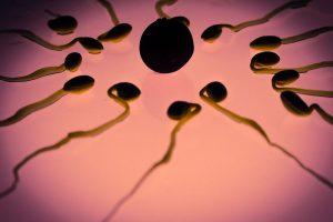 temps renouvellement sperme